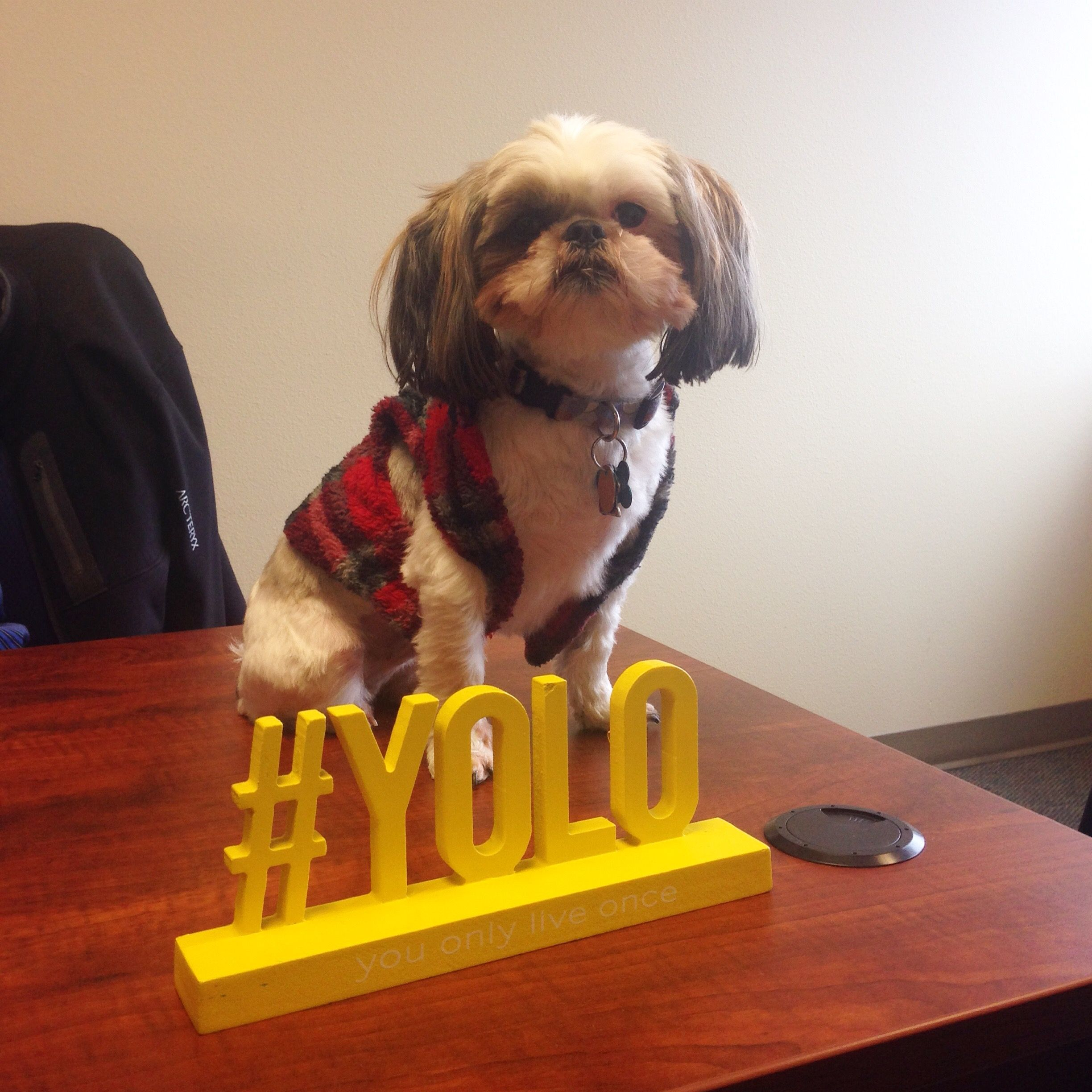 Casual Friday Has Gone To The Dogs Yolo Cool Pets Best Pet Insurance Dog Insurance