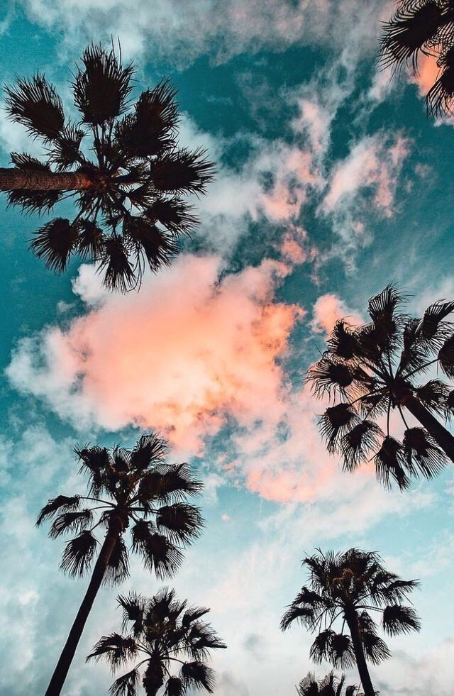 The Perfect View Palmtrees Sunset Hawaii