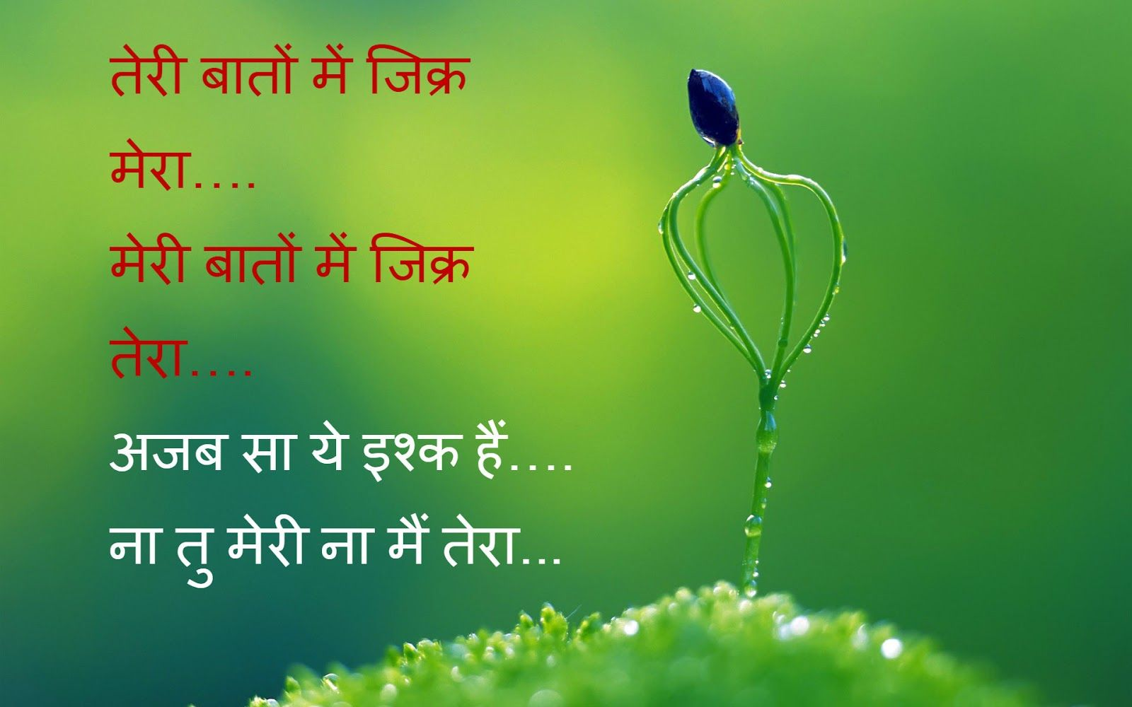 Hindi ShayariLove Shayari ImagesSad Wallpapershappy New