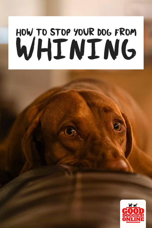 How To Stop Your Dog From Whining In 2020 Dog Whining Dogs Your Dog