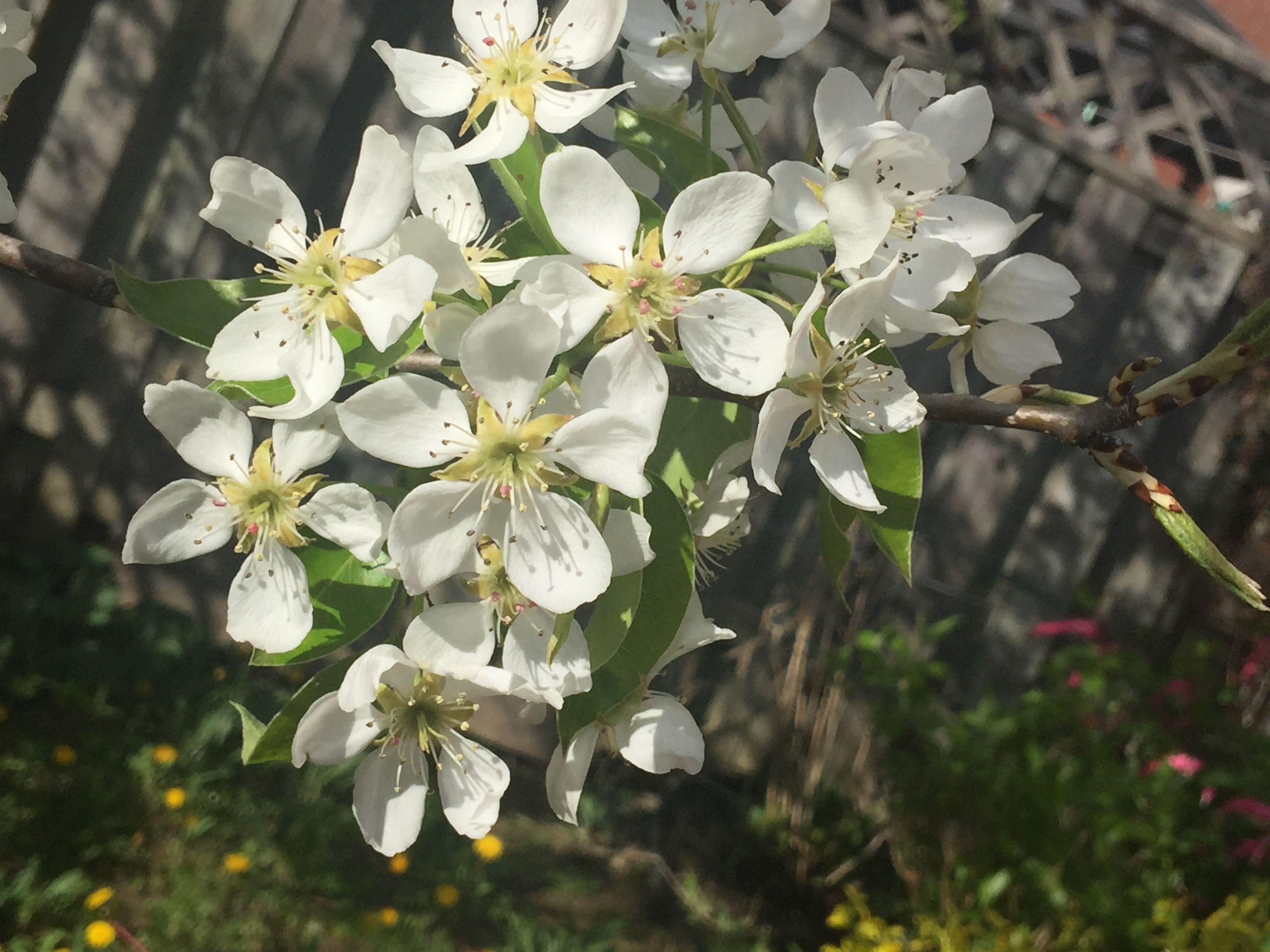 Underneath the sun- pearls flowers bloom- Tyra. D