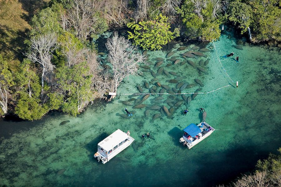 Crystal River Manatee Viewing on Florida's Nature Coast