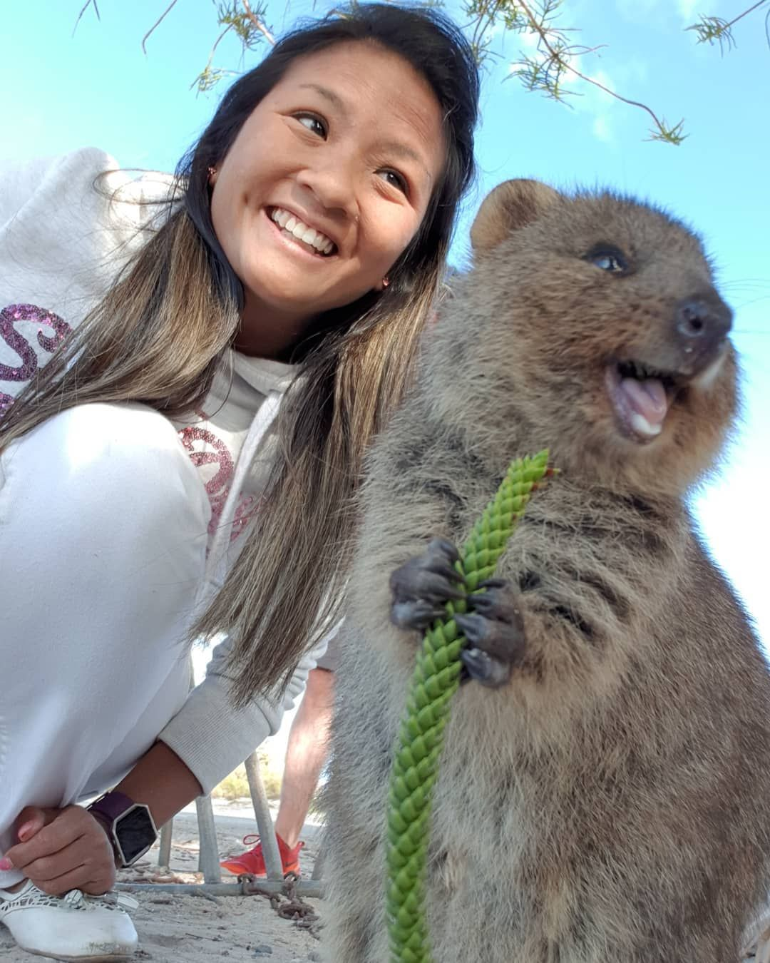 "A quokka from Rottnest Island, Australia. ""Happiest animal"