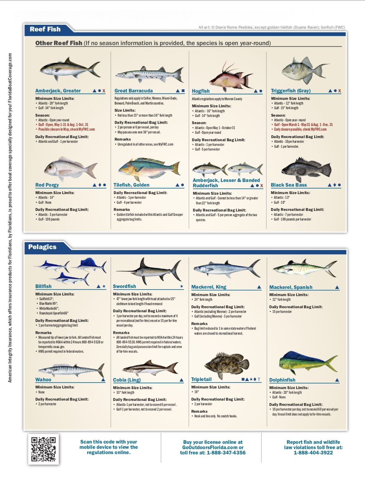 Saltwater Fishing Regulations Pt 2 Fish Photo Hogfish Fish
