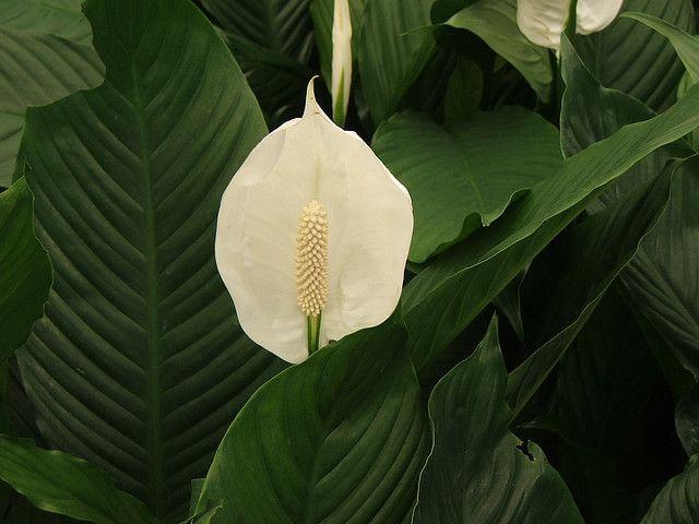 4 plantas de interior que necesitan muy poca luz plantas for Plantas de interior que no necesitan luz