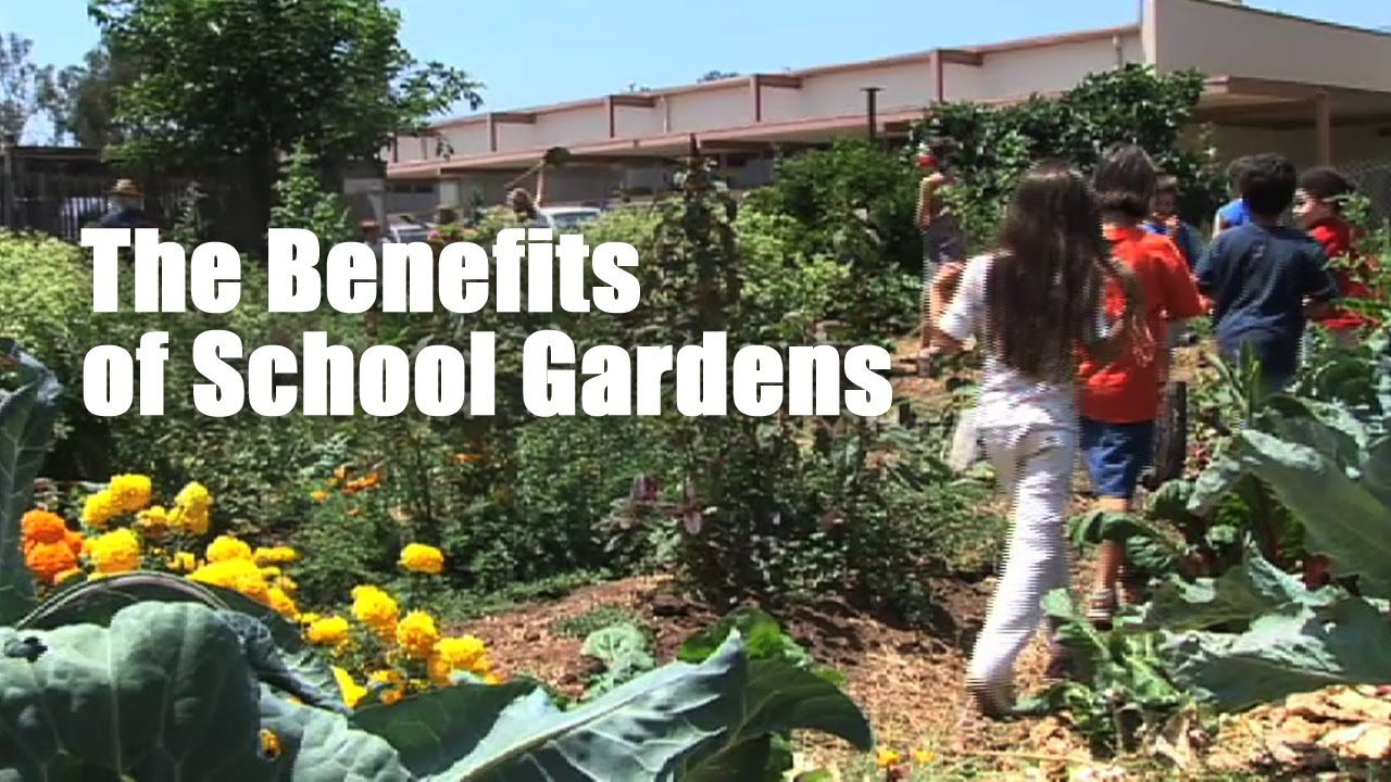 School Gardens Are Sprouting Up All Over The U.S., Offering Kids And  Parents An Opportunity To Learn How To Grow Their Own Food Using Organic  Methods.