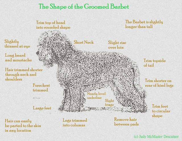 Resources Grooming Care And Training Dog Breeds Medium Grooming The Perfect Dog