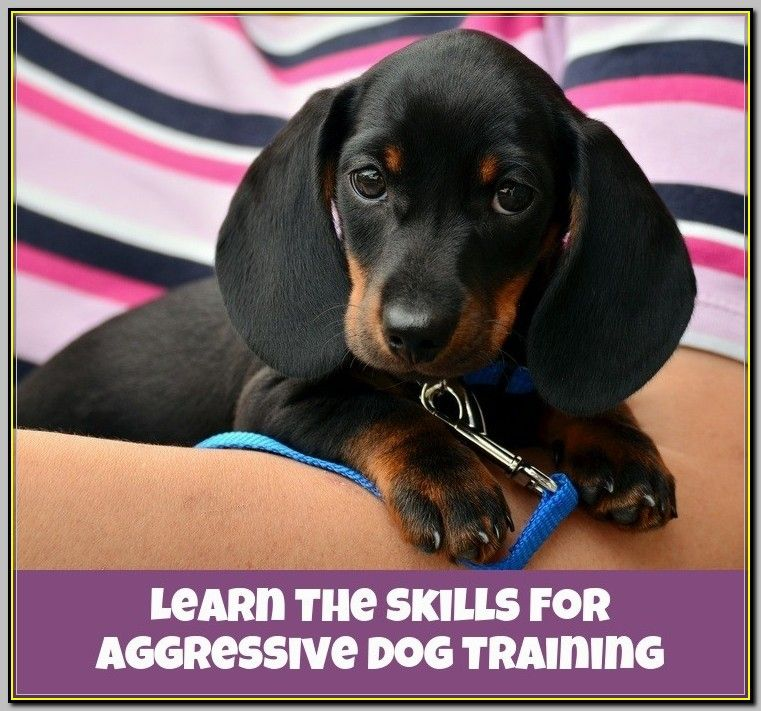 What To Do If You Need Aggressive Dog Training Aggressive Dog