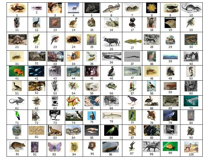 all animals names - photo #31