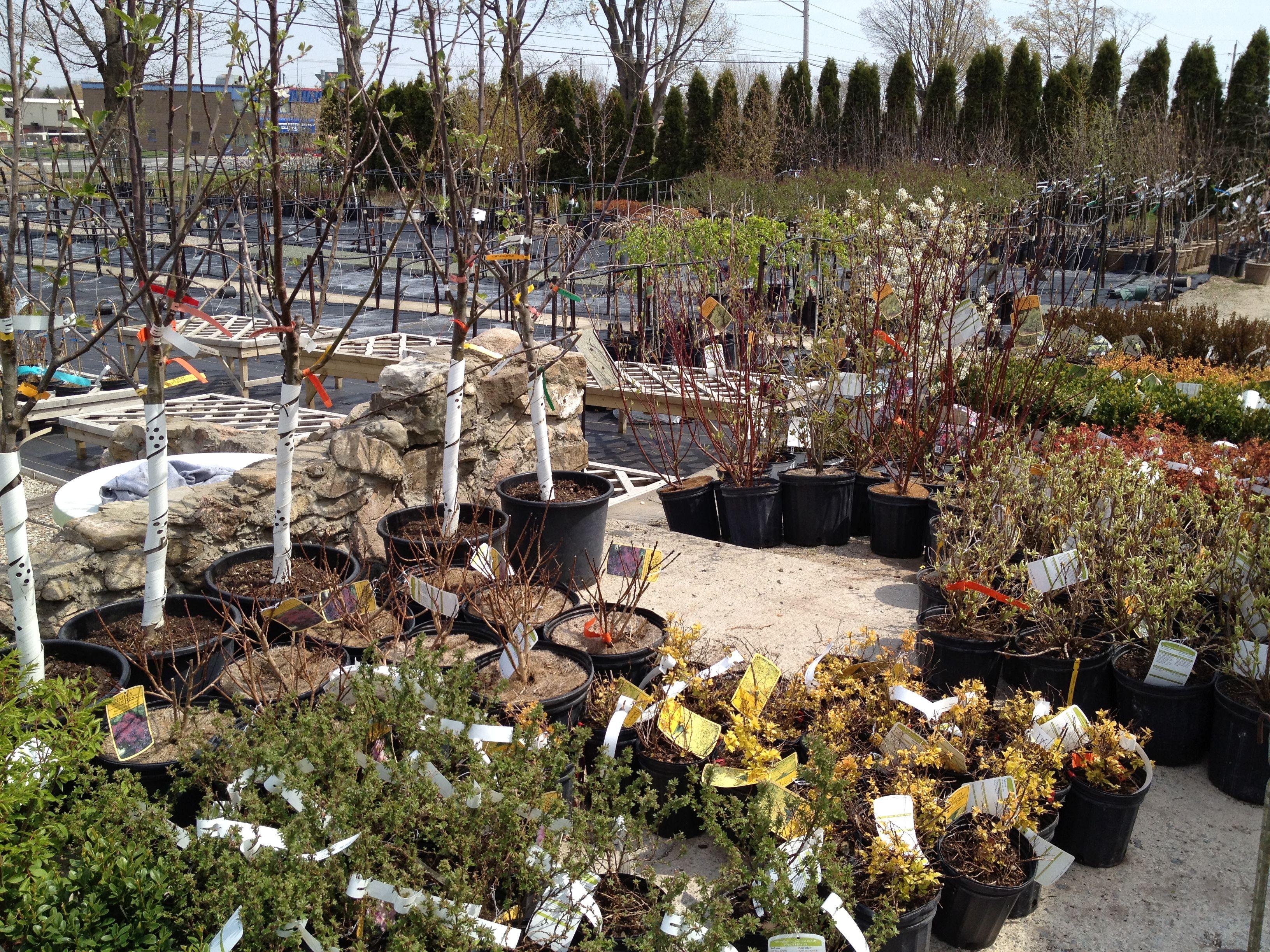 Day 343 Of 365 Dufferin Garden Centre With Images Garden