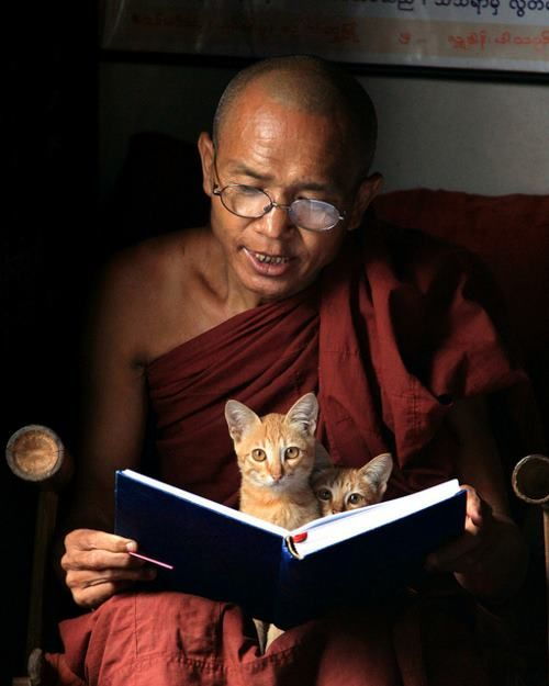 A cat taking teaching from the Lama...no doubt it will make him an enlightened being...