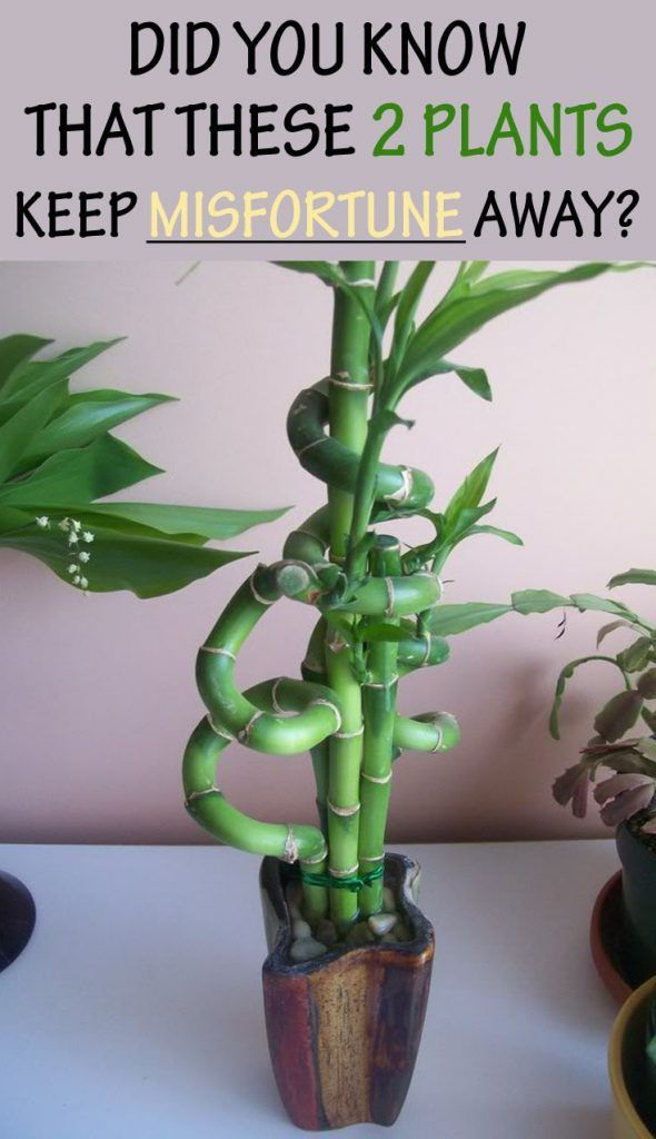 Lucky Plants To Keep In Home