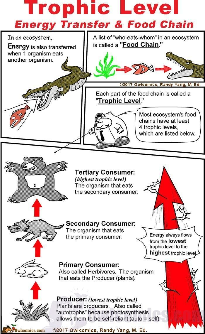 Trophic Levels By Owlcomics Making Science Reading Painless A Science Resource For K12 Education Trophic Level Life Science Middle School Science Reading [ 1138 x 700 Pixel ]