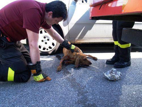 Obbligo soccorso animali: la guida su cosa fare e chi ...