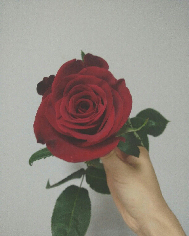 Rose 🌷 #flower #instagram #red #mypicture | ❤ love red