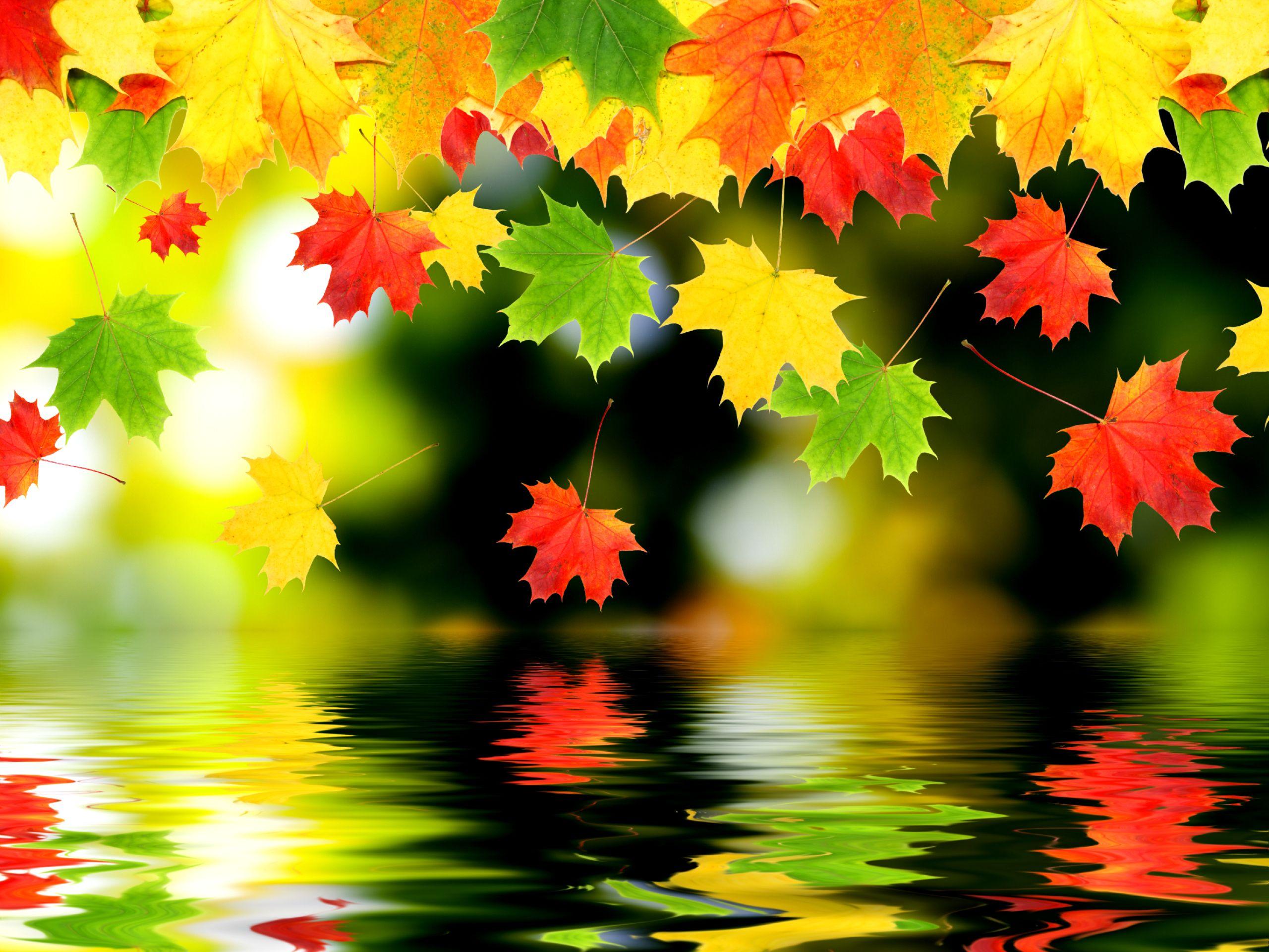 Desktop : Fall Leaves Wallpaper Photography Wallpaper Wallshed ...