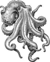 Polpo Disegno Cerca Con Google Bozze Octopus Tattoos Octopus