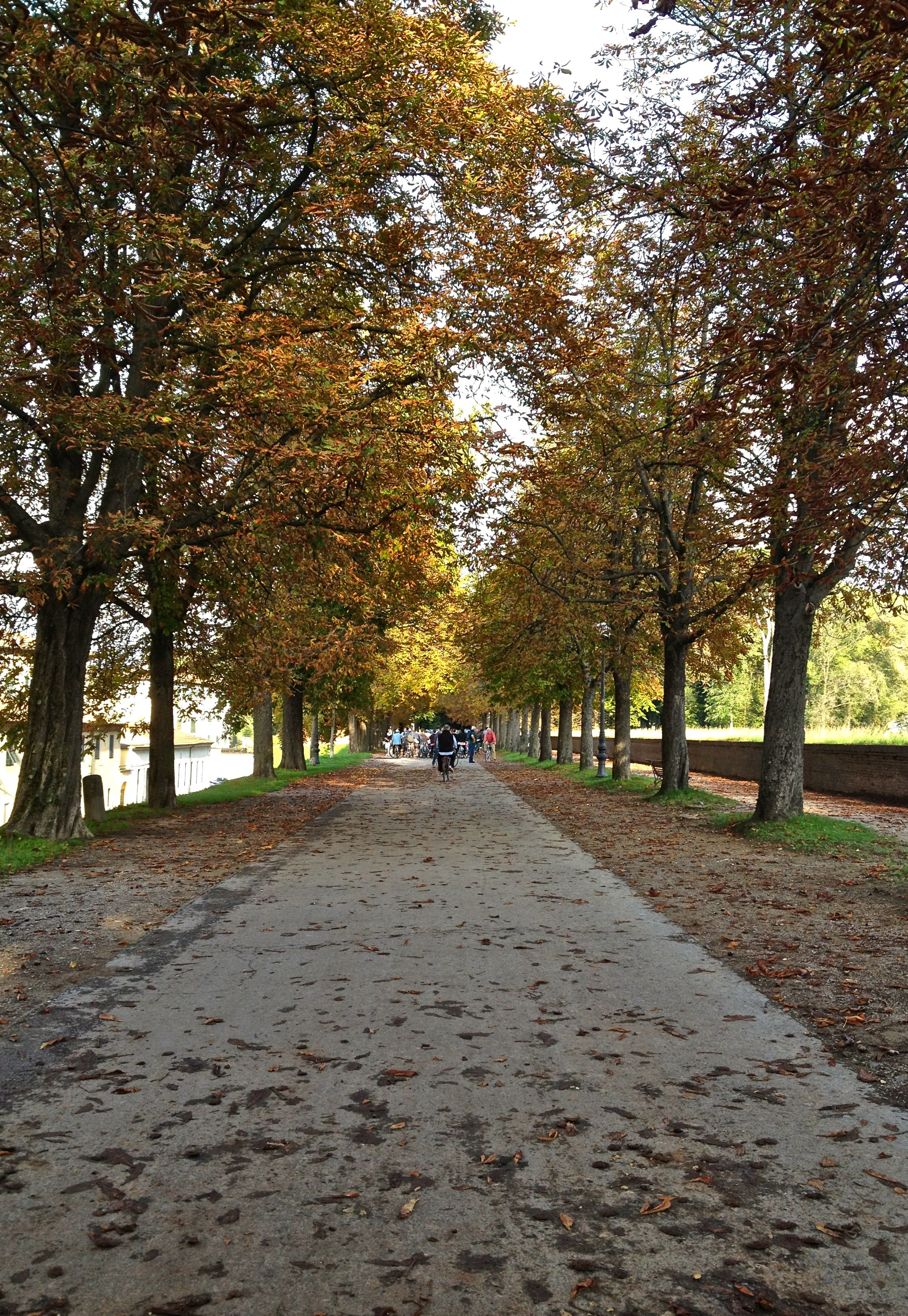 how to travel from oasi di letizia to pisa