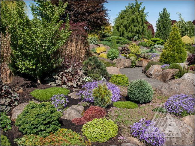 Conifer Garden Ideas 2012 60 beautiful conifer shrub tree plant combinations Amazing Low Maintenance Conifer Gardens Google Search