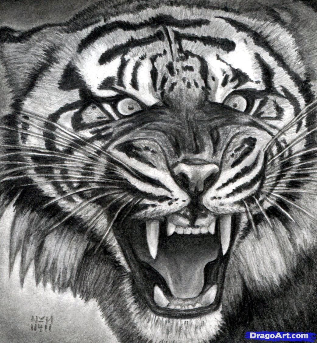 How to Draw a Roaring Tiger, Step by Step, Rainforest
