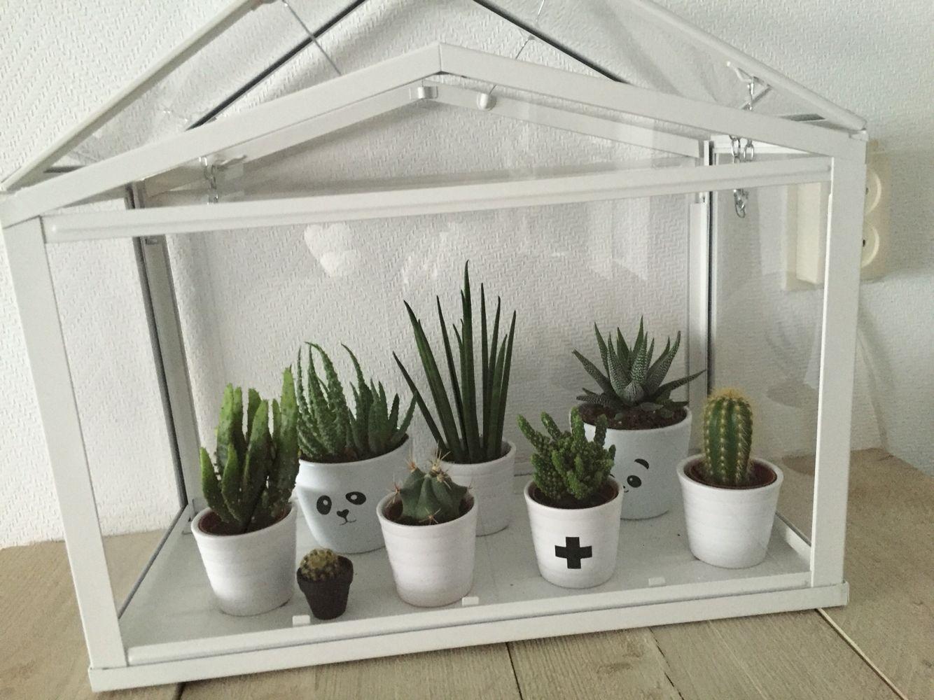 Zwart wit wonen ➕ cactus 🌵 huis