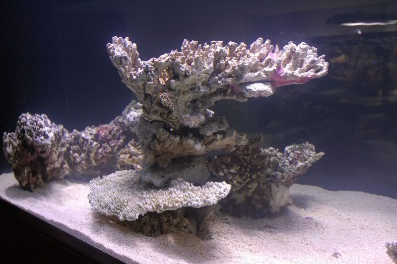 different types of live rock aquascape - Google Search ...
