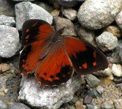 equador butterfly photos | Photos - Ecuador 2007