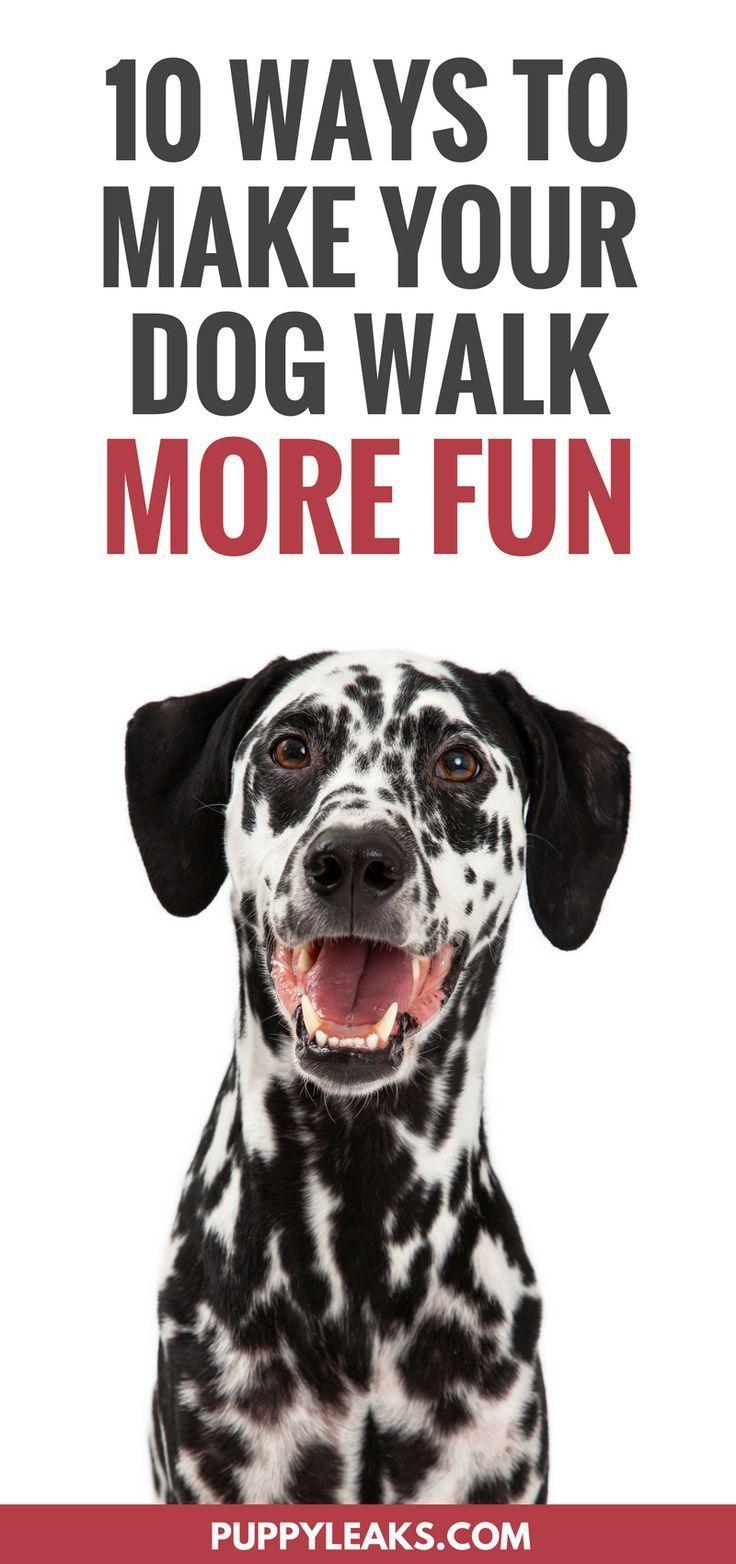 10 Ways To Make Your Dog Walk More Fun Dog Walking Dog Training