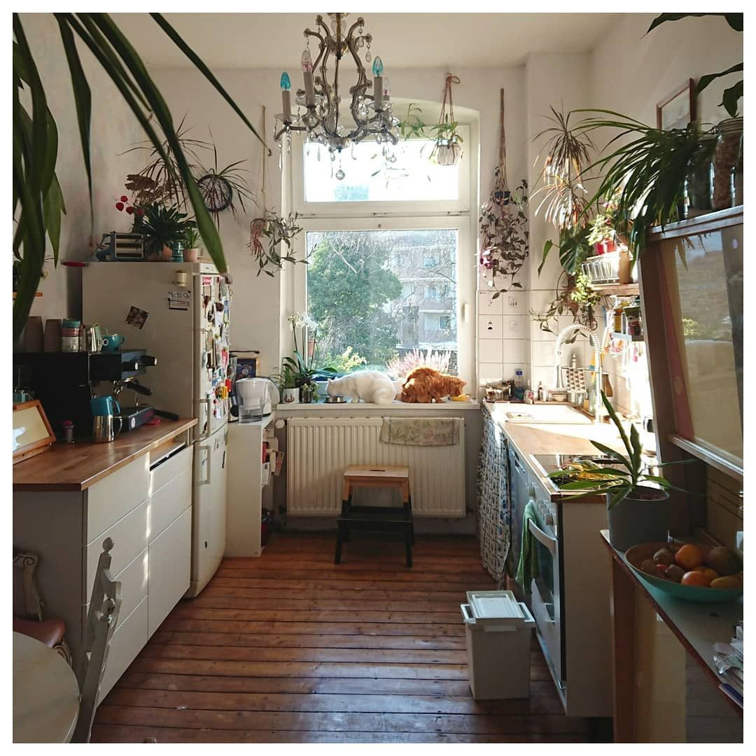 La imagen puede contener planta, mesa e interior   European ...