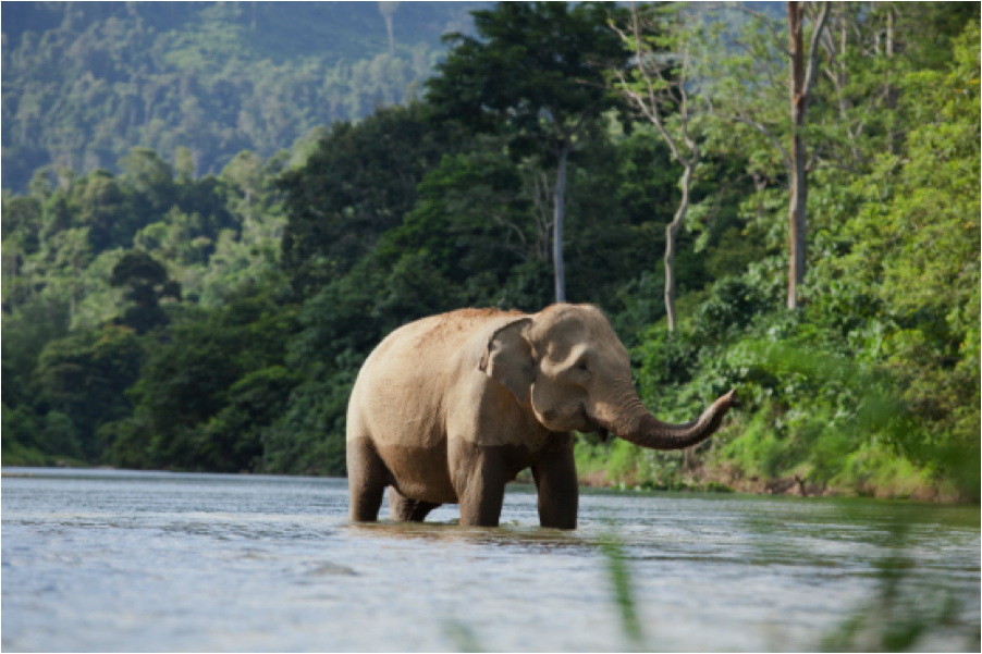 Indonesia's Rainforests Biodiversity and Endangered