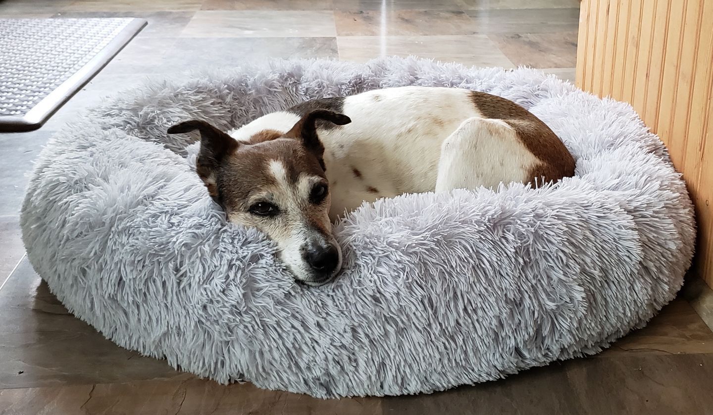 The Pet Calming Bed Cool dog beds, Dog