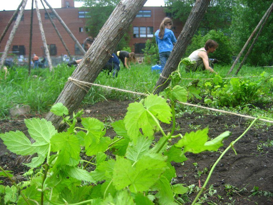 Faire pousser ses légumes en zones urbaines ? Rien de plus facile avec ces quelques pistes pour urbains à la main verte.