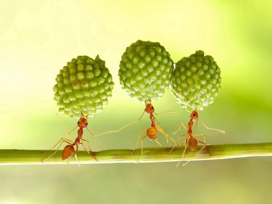 photo: SUPER ANT | photographer: Eko Adiyanto