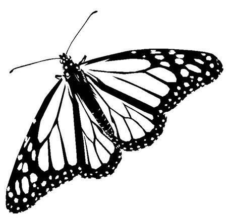 Okul öncesi Kelebeğin Oluşumukelebeğin Oluşumu Boyama Sayfası