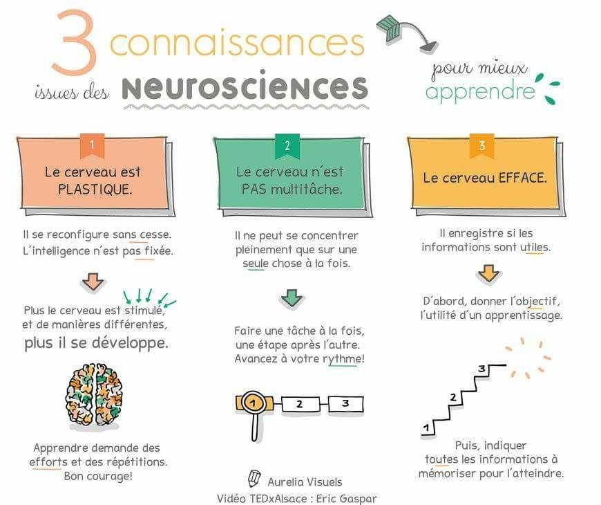 Le Traitement De L Information Par Le Cerveau Neurosciences Gymnastique Du Cerveau Gestion Mentale