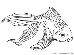 Bildergebnis Für Malvorlagen Fische Window Color Embroidery