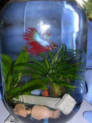 Betta Fish Bowl Decorations Betta Fish  Aquariumfish Pretty Cool Ideas Here