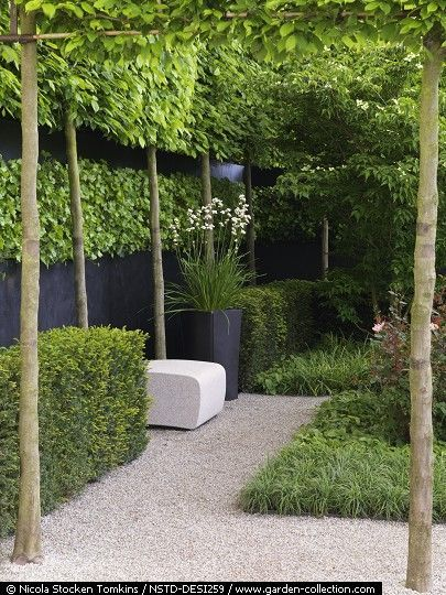 Image result for pleached tree frames | Small backyard ...