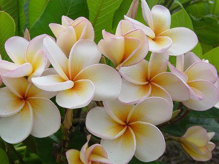Die wachsen in Hawaii überall auf Bäumen. | Die Schönheit der Welt ...