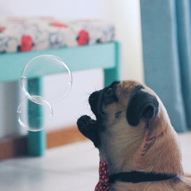Pin Oleh Puppydoglove Di Dog Puppy Love
