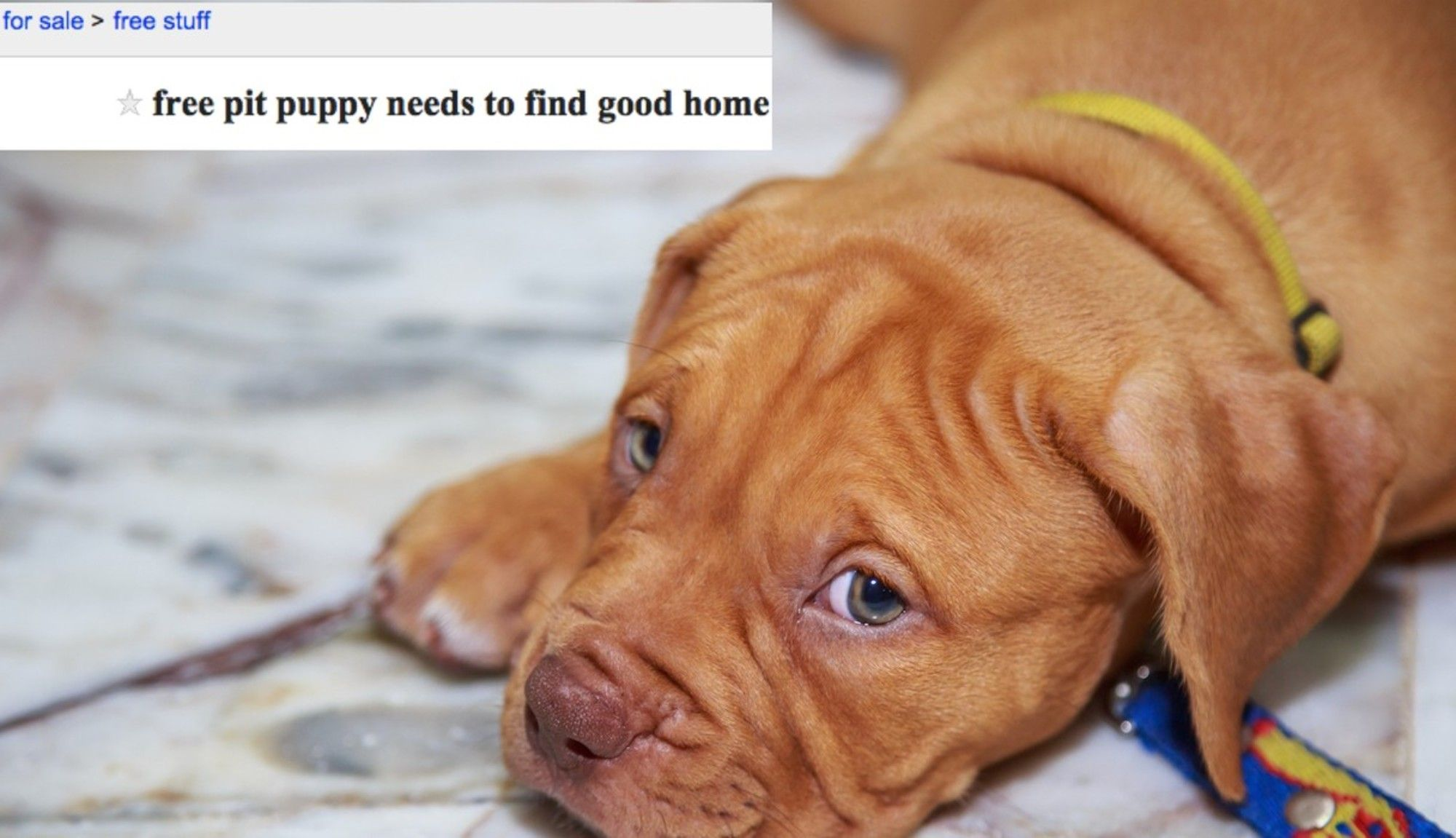 Why Giving Pets Away On Craigslist Is A Terrible Idea With Images Pets Pit Puppies Puppies