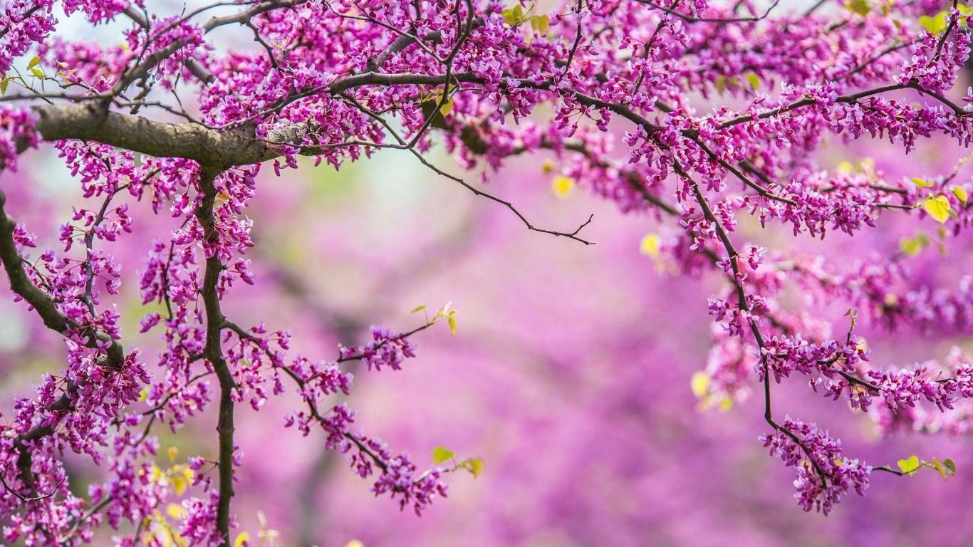 Skachat Oboi Vetki Priroda Derevo Vesna Nature Tree Spring