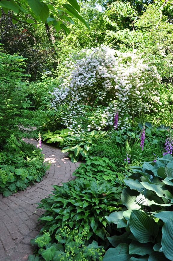 What makes a garden great? - Three Dogs in a Garden