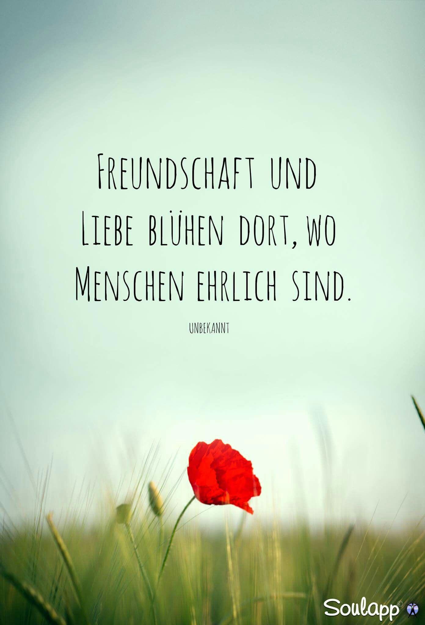 Referenz Sprüche Freundschaft Danke - Sammlung deutscher