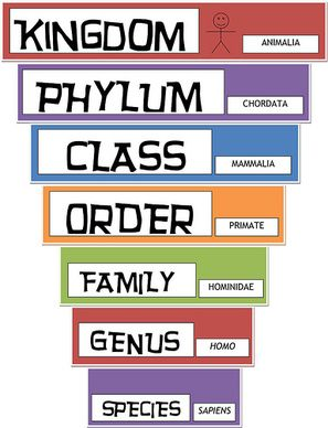 Classification Of Living Things Teaching Biology Science Lessons Science Classroom
