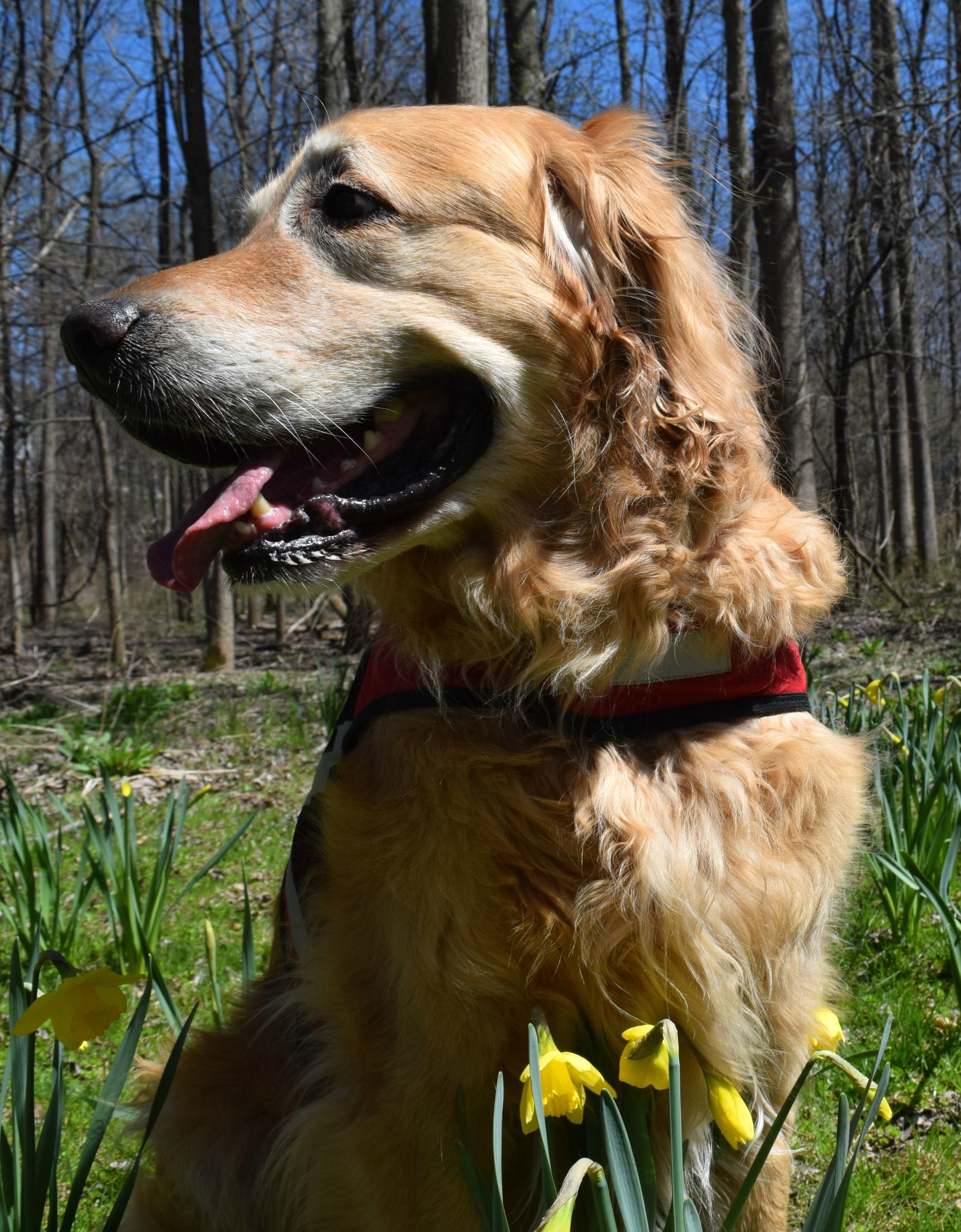 Hiking The Daffodil Trail At Powder Mills Park Mill Park Hiking Dogs Daffodils