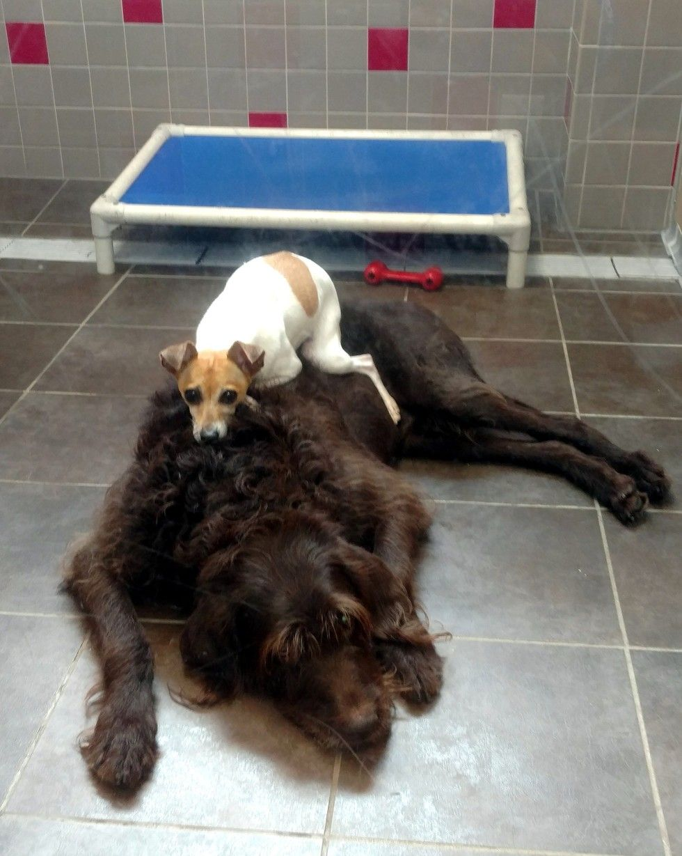 Dogs Who Lost Their Home Can T Stop Cuddling In The Shelter Dog