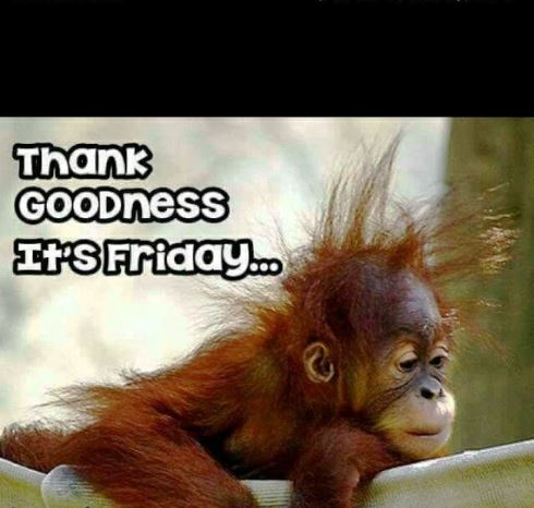 Funny Good Morning Friday Meme Make Smile On Face Funny Good Morning Images Good Morning Friday Morning Quotes Funny