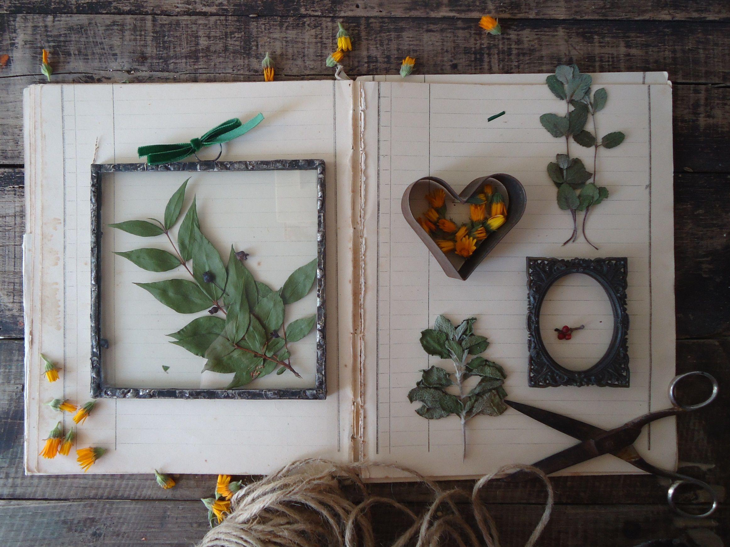 Quadro Vero Mirto Essiccato Erbario Sottovetro Festa Della Mamma Regalo Casa Nuova Quadro Botanica Piante Off New Home Gifts Small Pictures Herbarium
