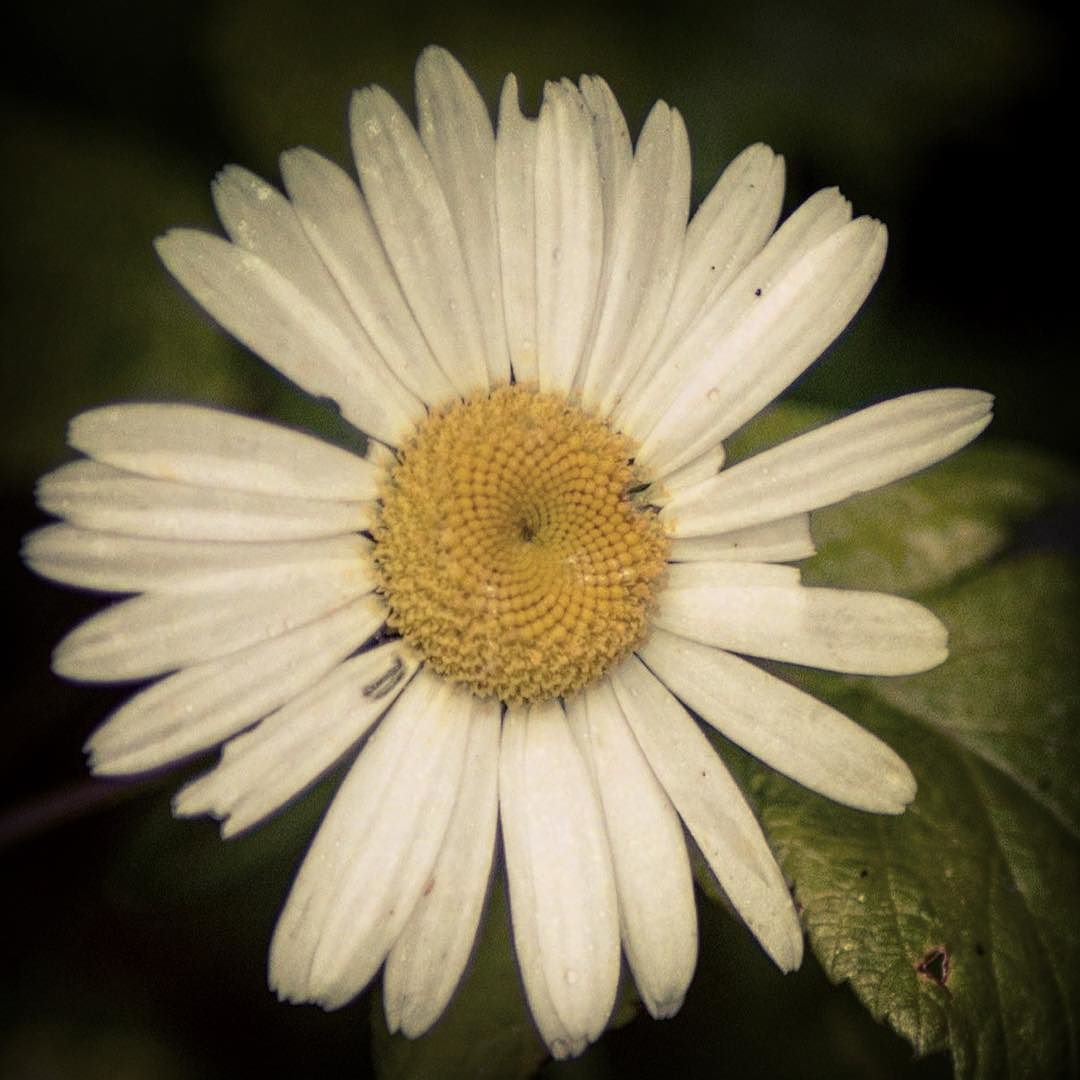 Even when a flower is imperfect it's still beautiful. So are you. <3